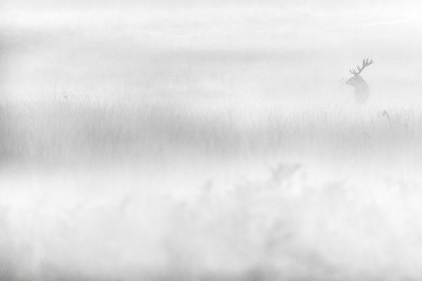 Viaje fotográfico a inglaterra berrea del ciervo