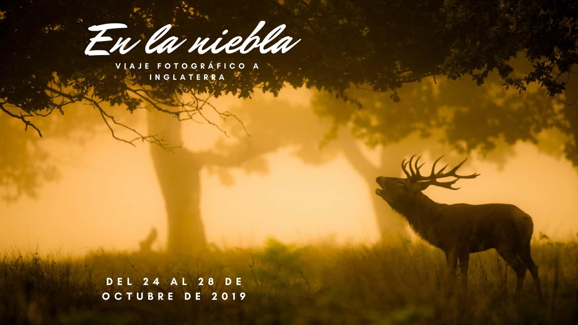 Viaje Fotográfico berrea del ciervo